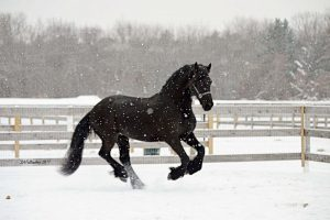 Seacoast Equine - The Best Equine Veterinarian in New Hampshire and Maine